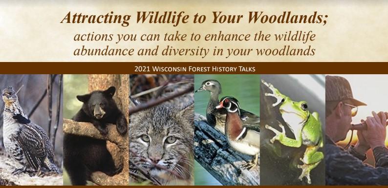 attracting-wildlife-2021